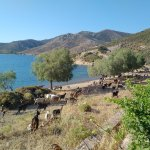 A herd of goats past the compound every morning, waking you up to the sound of their bells! :)