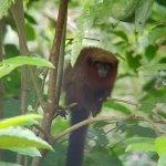 Photo de Tambopata Research Center