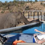 Elephant drinking from Saline Pool