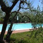 Idyllischer Pool zwischen Lavendel und Olivenbäumen