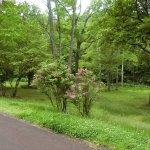 Takino Suzuran Hillside National Park Foto