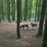Photo of Wolves of Gueret