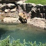 Foto de Parque Zoologico de Chapultepec