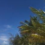 Foto de Southern Palms