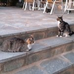 The hotel cats - well looked after.