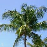 Sea Shell Resort and Beach Club Foto