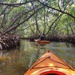 kayaking through the mangrove tunnels