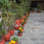 Marigolds in the courtyard