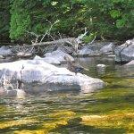 Stay Lakeside Explore Moosehead Lake Nature by canoe or kayak
