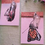 Photo de Mariposas de Mindo - Butterfly Garden
