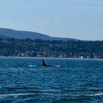 San Juan Island Whale & Wildlife Tours Foto