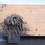 Entrada da colmeia de abelhas - MIB