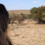 Photo of Mokolodi Nature Reserve