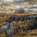 Wild About Mull Wildlife Tours Foto
