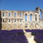 Photo of Abbaye de Maillezais