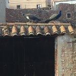 Photo of Un Sueno en la Baronia