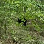 Bear sighting firing tour Aug 2016