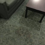 Stains in carpets - likely pet urine or excrement