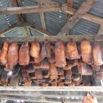 drying of shark meat