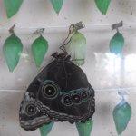 Foto de Butterfly Conservatory