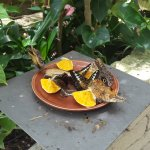 Photo of Collodi Butterfly House