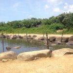 Photo of Subtropical Plant Paradise Yubujima Island