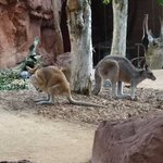 Kangaroos - you can even pet them during the talk time