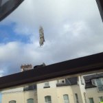 Old bird poo on room window