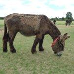 More donkeys!