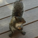 Friendly Squirrel at Breakfast