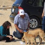 Stray dogs at pyramids had to stop and give them water.