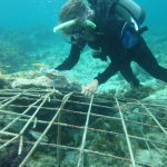 Thomas J. F. Goreau, PhD working on live reef