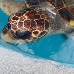 Its turtle season May-Oct No lights, fill in holes you dig or Shelly;s baby turtles could get st