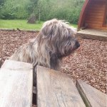 Willow checking out the picnic tables