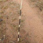 Porcupine spine found on bush walk