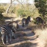 Zebra crossing!!