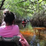 Wear your bug spray and enjoy being immersed in the everglades.