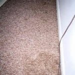 CAT PEE ON CARPET