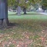 Fitzroy Gardens / Huge trees