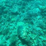 SEAWOLF - Divers照片