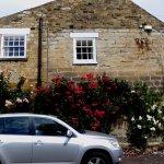 Fantastic display of rambling roses on the pub roadside wall
