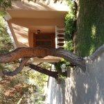 Pine Clubpeninsula Hotel