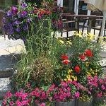 Blumen auf der Sonnen-Terrasse