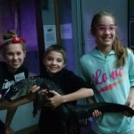 They help younger ones hold the alligator
