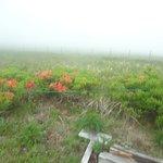 Photo of Utsukushigahara Highlands