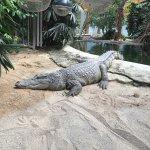Photo of Tropiquarium de Servion