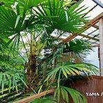 Yama Suite hot tub deck & lush garden area