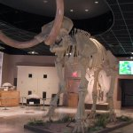 Mammoth in the foyer