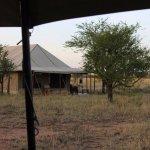 Photo of Ndutu Wildlands Camp