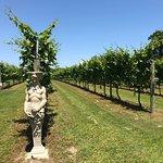 Wonderful Winery!